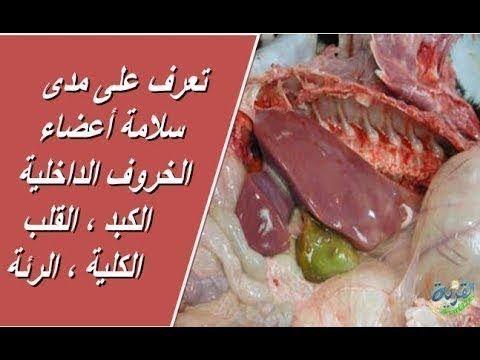 سر طبخ كابلي اللحم نص ذبيحة خطير لايفوتكم Beef Goat Youtube Yemeni Food Food Meat
