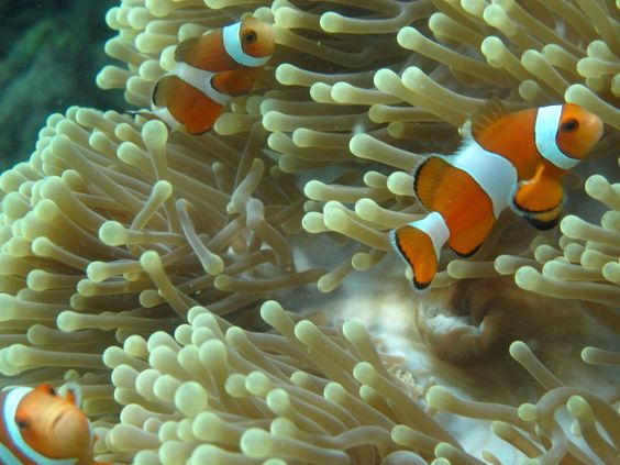 A pic from my recent holiday - the fish life underwater off Havelock Island, Andaman & Nicobar, India