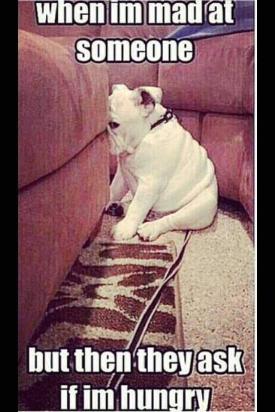 A Funny Dog Cute Funny Animals Funny Funny Animal Pictures