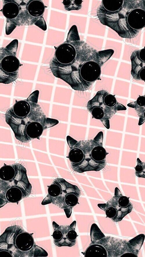 Imagen de cat, wallpaper, and pink