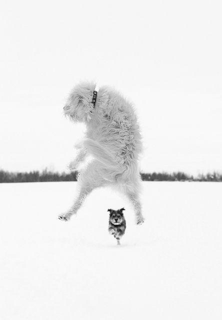 ジャンプするおしゃれでかっこいい犬の壁紙