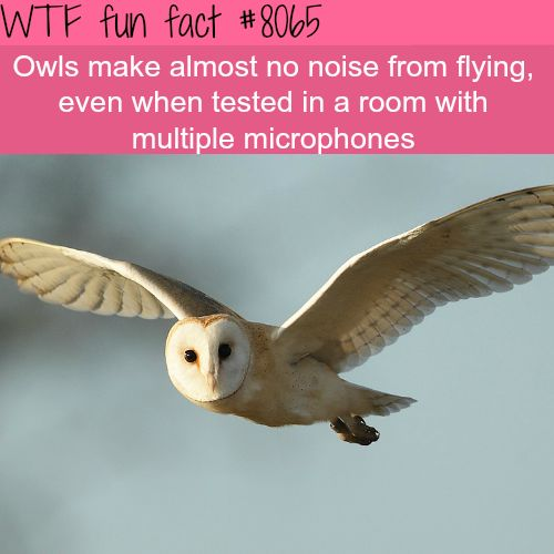 The quietest hunters - WTF fun fact