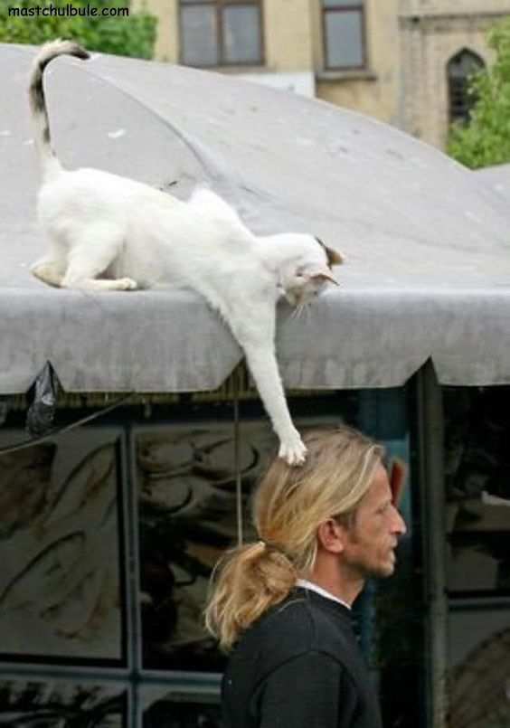 Proof Cats Are Highly Trained C.I.A. Agents