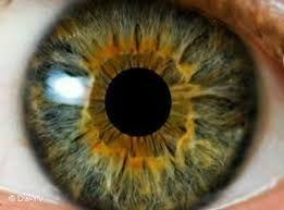 bildergebnis f r seltene augenfarben bei menschen augenfarben pinterest suche