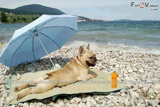 Funny Dogs On The Beach Funny Dog On Beach Funny Picture This