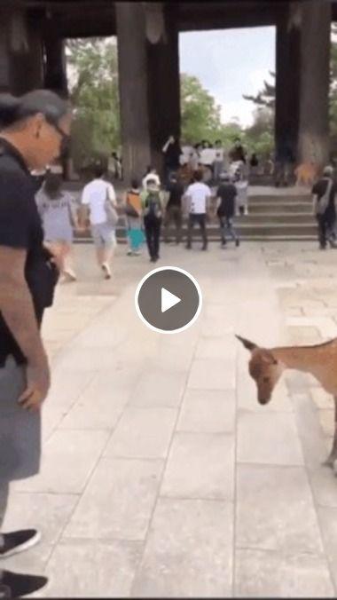 O animal curvou a cabeça ao cara fazer o mesmo com ele