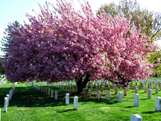 Arlington Cemetery, Washington D.C.