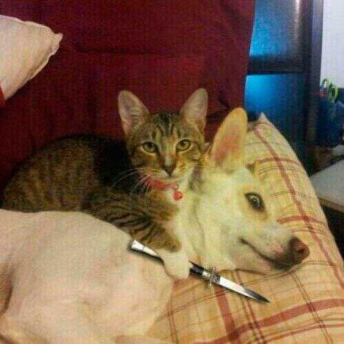 Memes Dia Del Gato Gato Con Cuchillo Perro Con Cara De Asustado Memesgatos Memesperros Meme Gato Gatos Memes Perros
