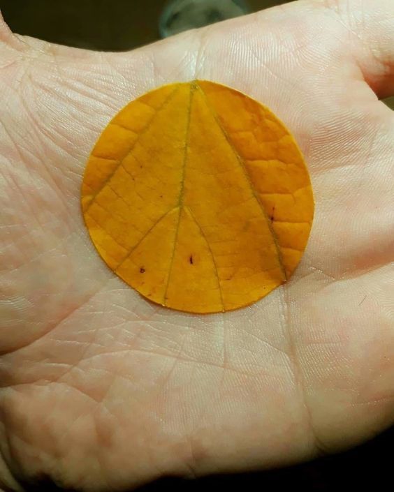 9. The perfect alignment of the lines of the hand with the ribs of the leaf
