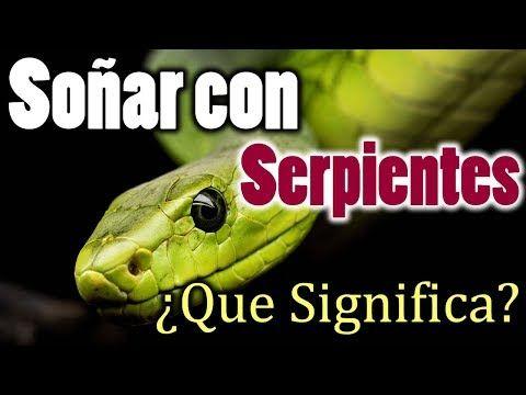 Soñar Con Serpientes Víboras O Culebras Que Significa Que Quiere Decir Descúbrelo Aquí Youtube Serpientes Culebras Significado De Los Sueños