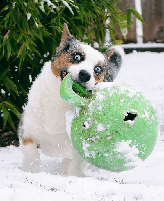 "52 Weeks for Dogs: 3/52/12 ""Snowapalooza!"" 