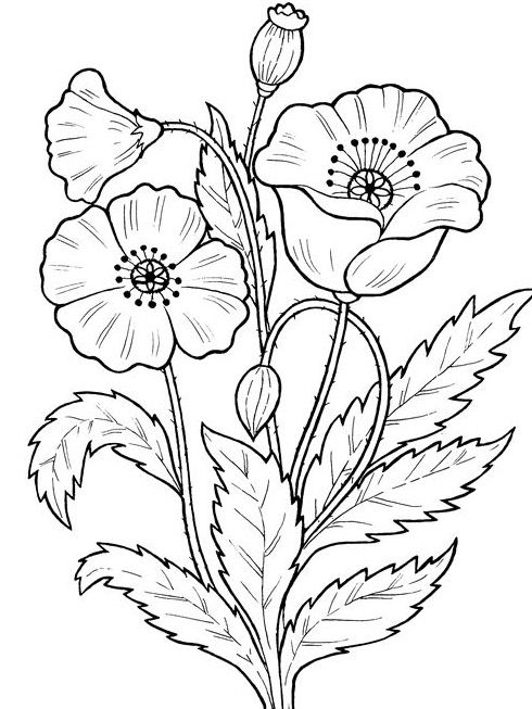 Pin By Gunay Dursun On Manualidades Embroidery Flowers Pattern Printable Flower Coloring Pages Flower Coloring Pages