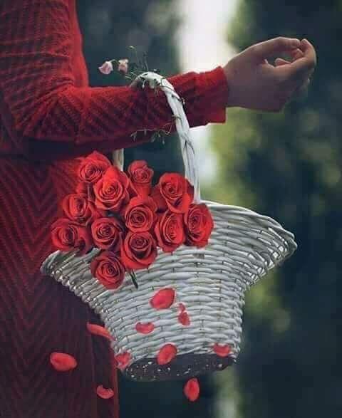 4 الوسم الورد على تويتر Beautiful Roses Flowers For You Beautiful Flowers