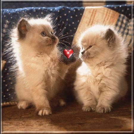 O amor está no ar...;)  Veja mais em http://www.comofazer.org