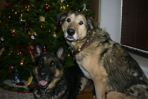 Heidi & Bear