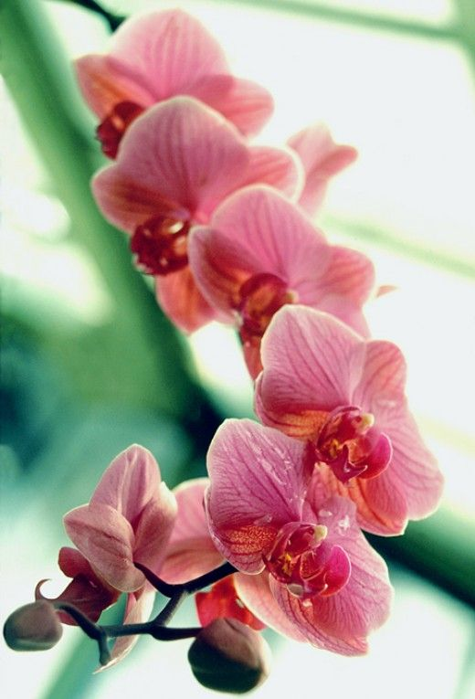 How to grow orchids for beginners. Easy care orchid types, orchid growing tips, how to keep your orchids happy and much more!  Don't be intimidated...give these beautiful and exotic flowers a try.