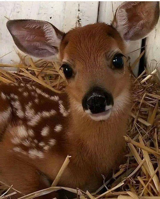 WMTruMalaysianCoffee on Twitter: Bambi looks really cute / Twitter