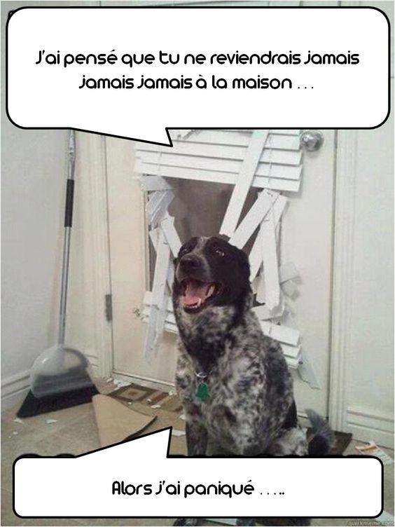 drôle de chien :) @zoomalia