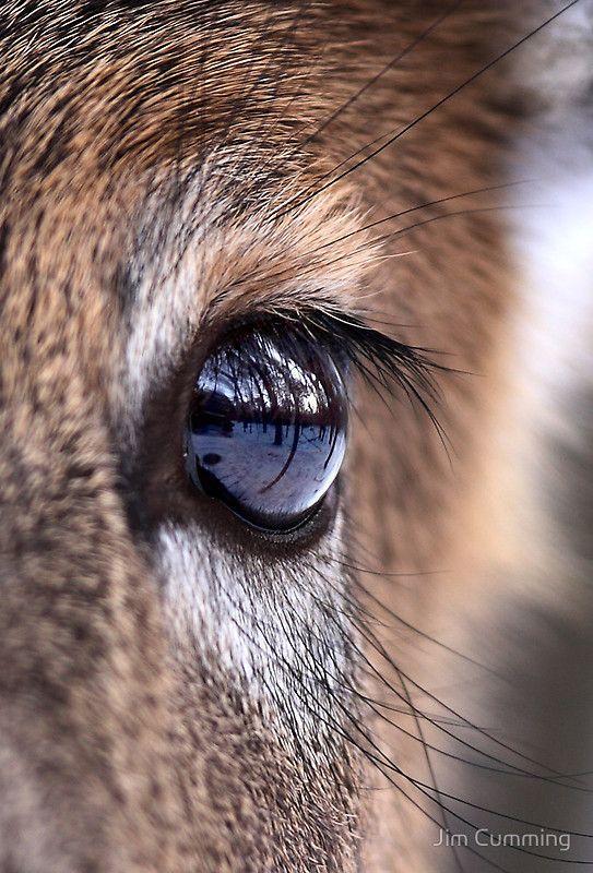 Animal Eye Art Google Search Eyes Pinterest Eye Art Art - 24 detailed close ups of animal eyes