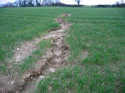 Can Plants Stop Soil Erosion Science Project Erosion Soil Plants