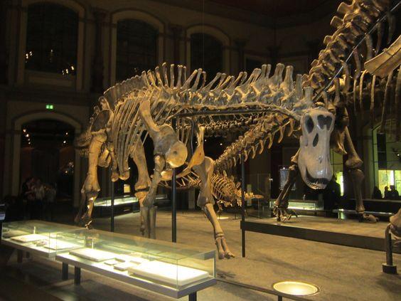 Dicraeosaurus_in_Berlin.JPG (1600×1200) - Museum für Naturkunde, Berlin. Dinosauria, Saurischia, Sauropodomorpha, Sauropoda, Neosauropoda, Diplodocoidea, Fagellicaudata, Dicraeosauridae. Auteur : Interfase, 2013.
