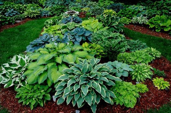 Vibrant colors and they are all Hosta :)