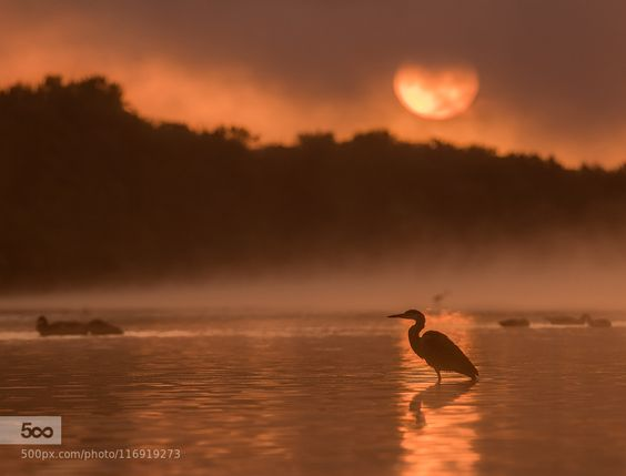Morning by Hawkeye68. Please Like http://fb.me/go4photos and Follow @go4fotos Thank You. :-)