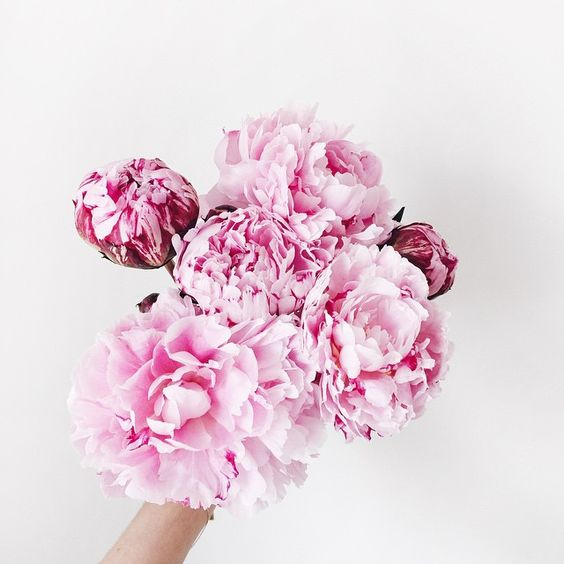 Birthdays Pink Peonies And Pink Bouquet On Pinterest