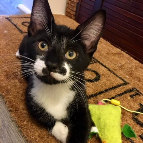 Asia Pawsitive Match Rescue Foundation Calgary Based Dog And Cat Rescue Cat Rescue Cat Adoption Dog Cat