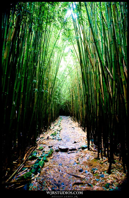 Love bamboo forrests!