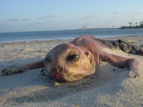 23 animaux étranges échoués sur la plage | SnapMonde | Page 8 La créature de Canvey Island À Canvey en Angleterre, deux carcasses similaires se sont échouées sur la plage à un an d'intervalle.