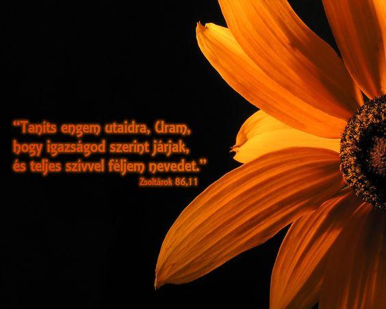 """""""Taníts engem utaidra, Uram, hogy igazságod szerint járjak, és teljes szívvel féljem nevedet."""""""
