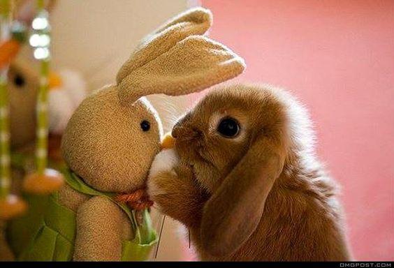Doll.. Bunny Friend