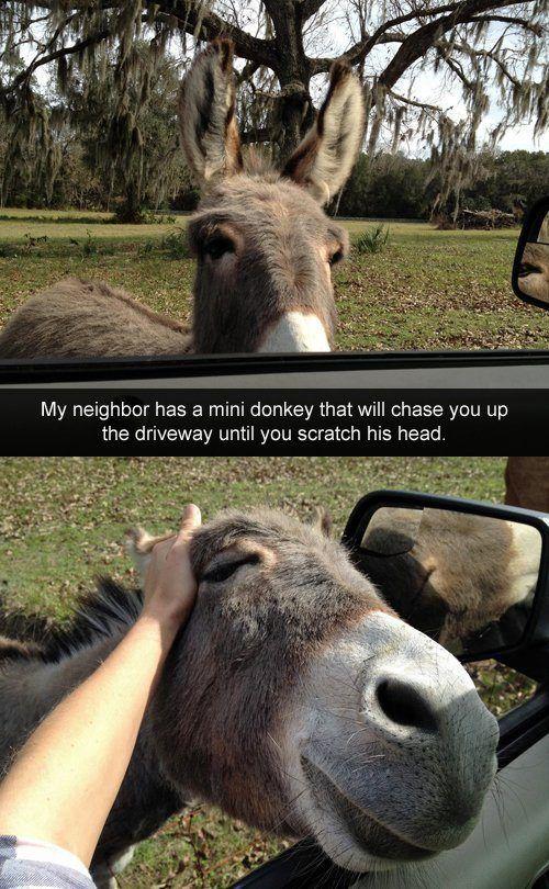 #happyminidonkey