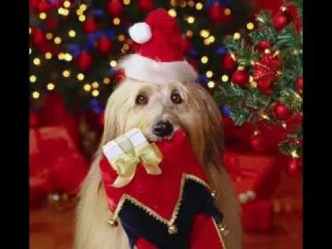 Auguri Di Buon Natale E Felice Anno Nuovo Celine Dion Christmas Youtube Merry Christmas Card Greetings Christmas Pet Photos Christmas Animals