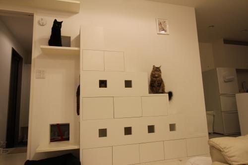 猫仕様の家 リビング編 猫生活まみれ風味 16匹のねことチョット人 猫の家具 ペットの部屋 ねこ