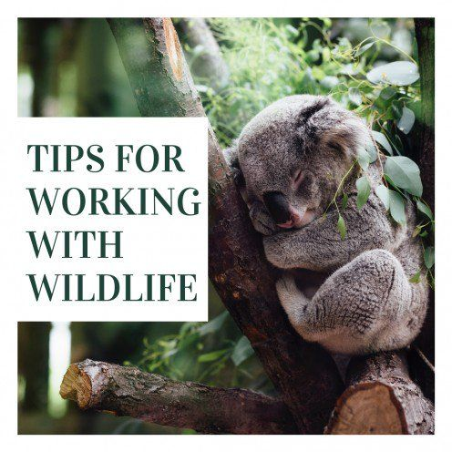 How To Work With Wildlife Wildlife Rehabilitator Careers Workingwithwildlife Wildliferehabilitation Savingwildlife Wildlife Rehabilitation Wildlife Animals
