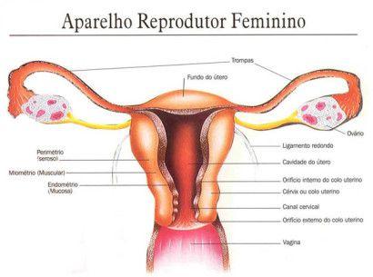 orgao reprodutor feminino