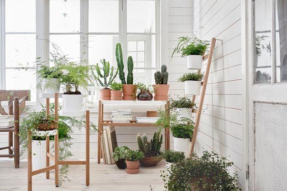 Rund um Zimmerpflanzen #2:<br /> Pflanzentypen