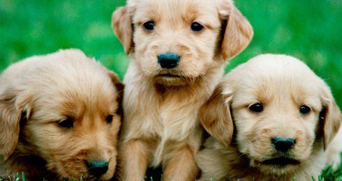Cutest puppies