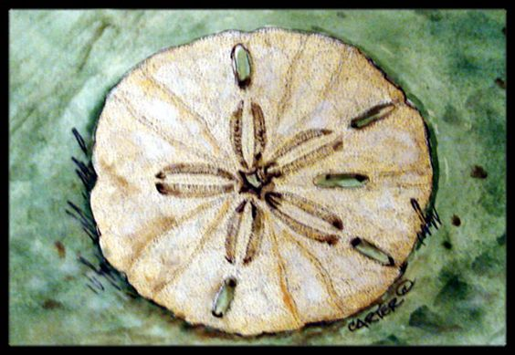 Sending Sand Dollars Back to Sea Indoor or Outdoor Mat 18x27 PJC1117MAT