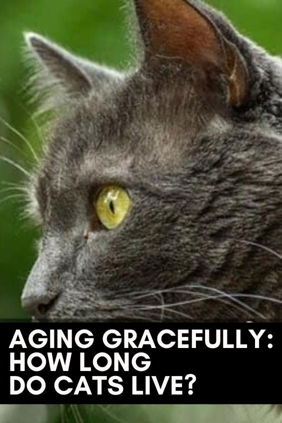 Aging Gracefully How Long Do Cats Live In 2020 Cats Beautiful Cats Pictures Cute Cat Names