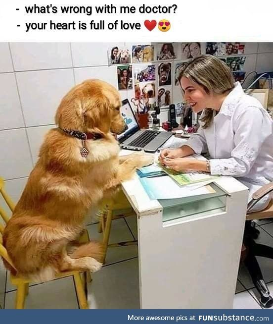 I M Afraid It S Terminal Funsubstance Cute Puppies Cute Funny Animals Memes