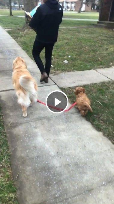 Cachorro guiando o seu companheiro