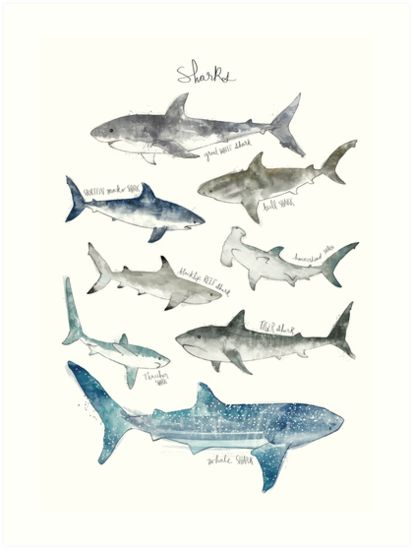 Sharks Art Print By Amy Hamilton In 2020 Shark Art Art Prints Poster