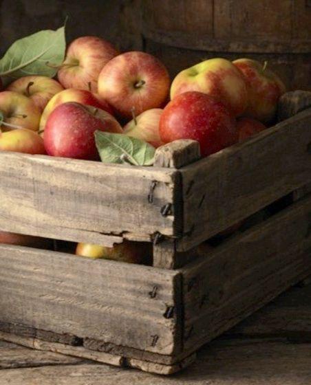 going apple picking ... fun!