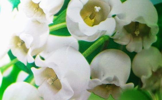 Josefine 21 Test Blog: AJAX Fete des Fleurs - Frühlingsblumen mit 24H+ No...