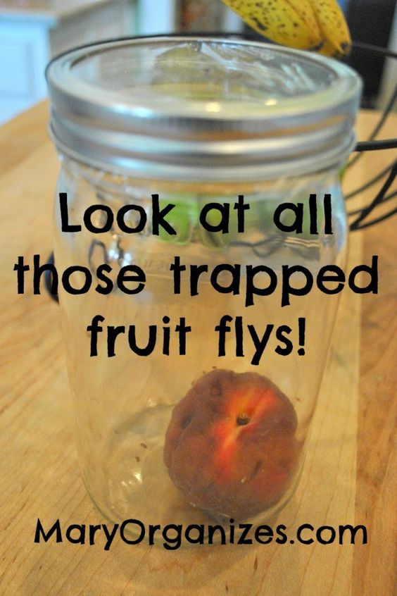 Mason Jar Fly Trap