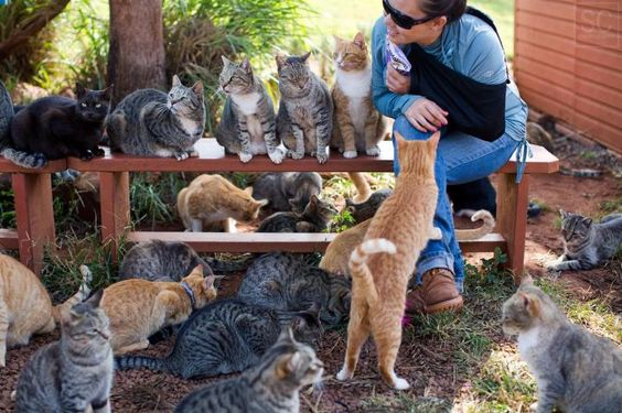 Nestled on the small Hawaiian island of Lanai is a feline oasis that's home to nearly 500 cats. Known as the Lanai Cat Sanctuary, it provides food, shelter, adoption, healthcare, and spay/neuter services for the cats that roam the land.