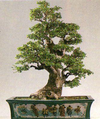 Fotos de bonsáis Perfectos - INFOJARDIN